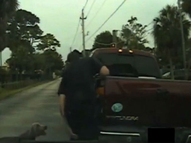 Officer's dash camera shows how three dogs attacked him at a traffic stop - wptv.com