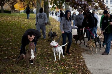 Flint emergency manager makes stronger vicious dog ordinance law in city | MLive.com