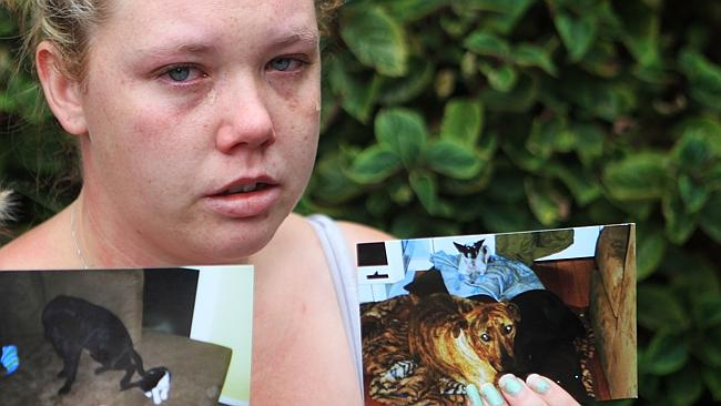 Outrage from supporters as Frankston Council declares it will put down two dogs accused of killing a cat | Perth Now