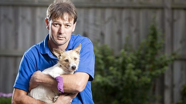 Pit bull pair kill two Jack Russell terriers | Herald Sun